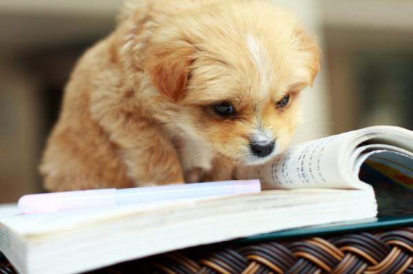 Picture of a puppy studying. I know. Awesome.